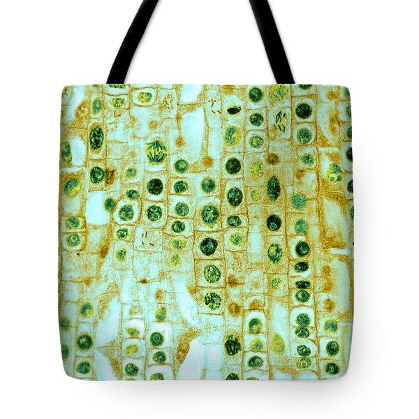 Hyacinth Root Tip Cells Tote Bag