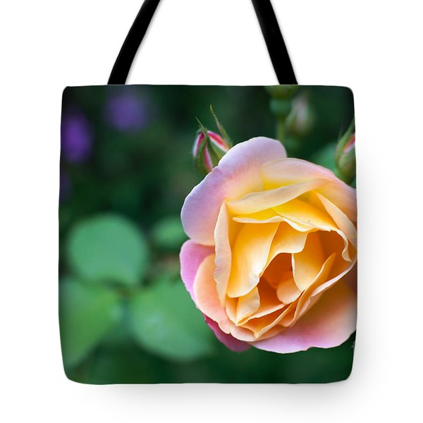 Tote Bag featuring the photograph Hybrid Tea Rose by Matt Malloy