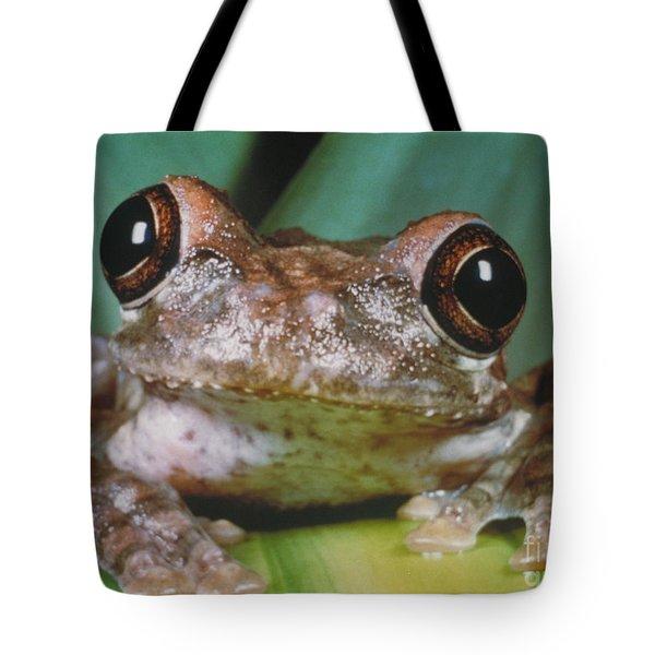 Hyla Vasta Tree Frog Tote Bag by Jeff Lepore