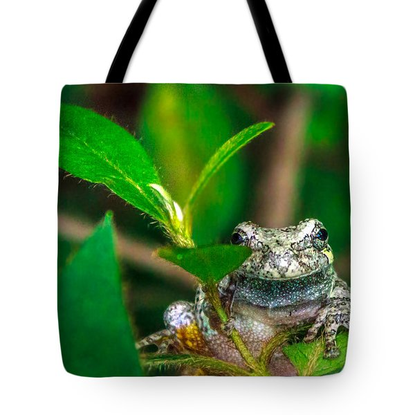 Tote Bag featuring the photograph Hyla Versicolor by Rob Sellers