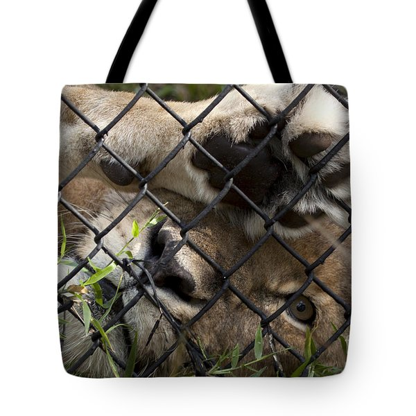 I Want To Go Home - Female African Lion Tote Bag