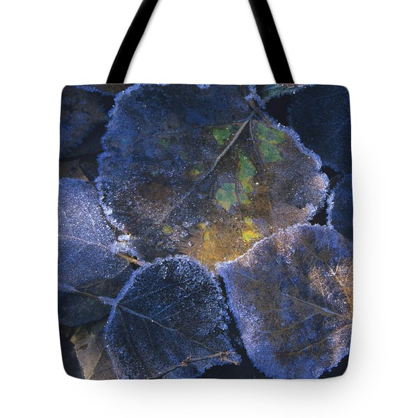 Icy Leaves Tote Bag by Susan Rovira