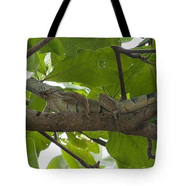 Iguana In Tree Tote Bag by Dan Friend