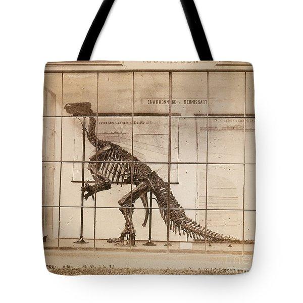 Iguanodon Skeleton Mesozoic Dinosaur Tote Bag by Science Source