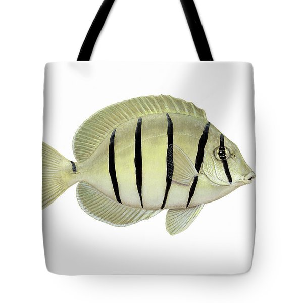 Illustration Of A Convict Tang Fish Tote Bag by Carlyn Iverson
