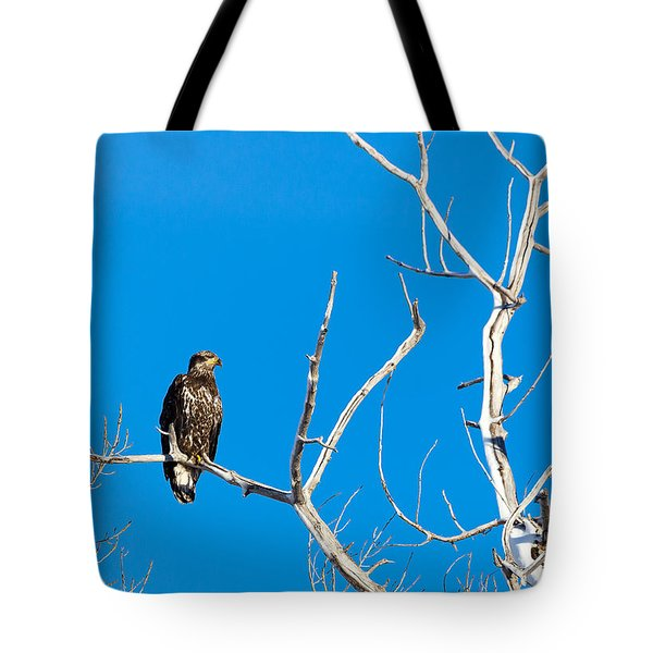 Immature Bald Eagle Tote Bag
