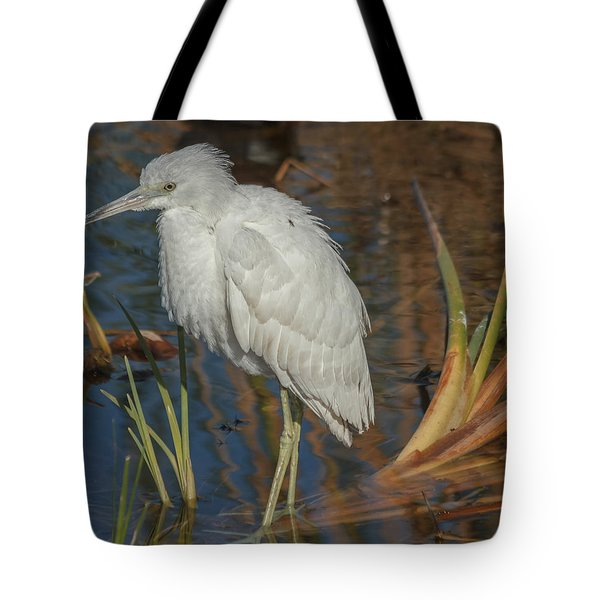 Immature Little Blue Heron Tote Bag by Jane Luxton
