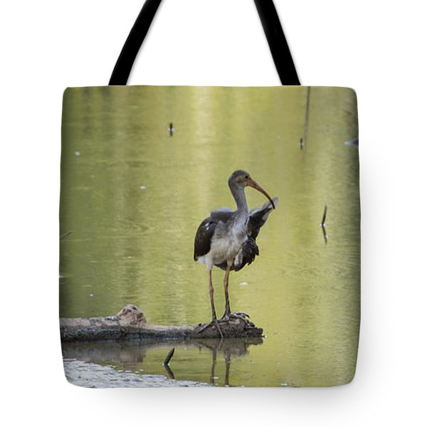 Immature White Ibis Tote Bag