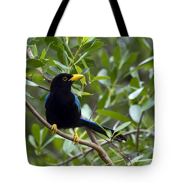 Immature Yucatan Jay Tote Bag by Teresa Zieba