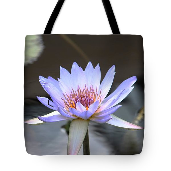 In The Morning Light Tote Bag by Yvonne Wright