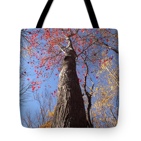 In The Woods 1 Tote Bag