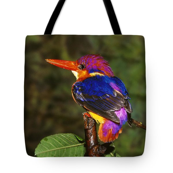 India Three Toed Kingfisher Tote Bag by Anonymous