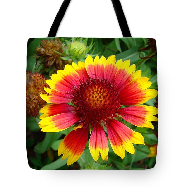 Indian Blanket Flower Tote Bag by Sue Melvin