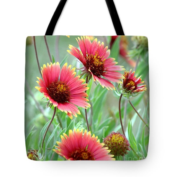 Indian Blanket Wildflowers Tote Bag
