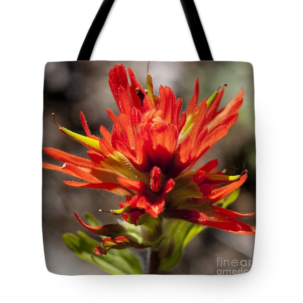 Tote Bag featuring the photograph Indian Paintbrush by Belinda Greb
