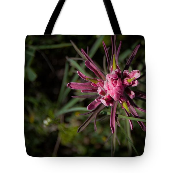 Tote Bag featuring the photograph Indian Paintbrush  by Dee Dee  Whittle