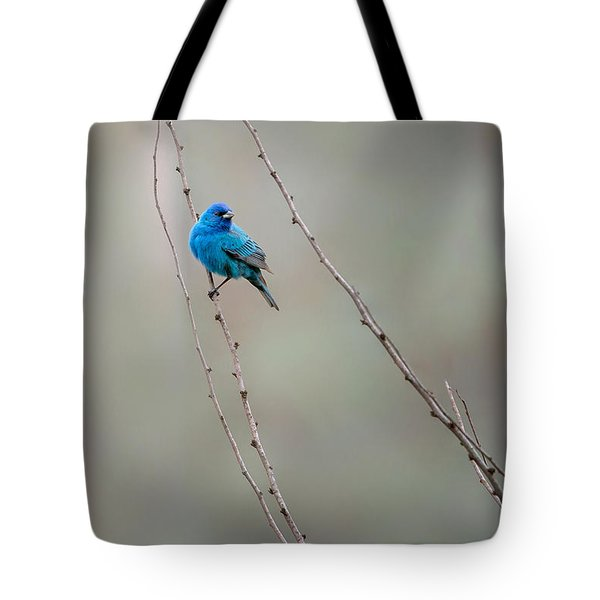 Indigo Bunting Tote Bag by Bill Wakeley
