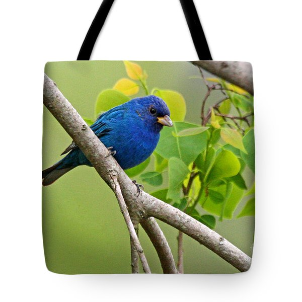 Blue Indigo Bunting Bird  Tote Bag