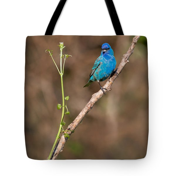 Indigo Bunting Portrait Tote Bag by Bill Wakeley