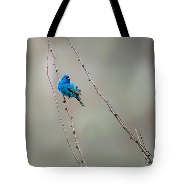 Indigo Bunting Square Tote Bag by Bill Wakeley