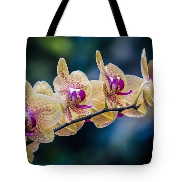 Inner Beauty Tote Bag by Sara Frank