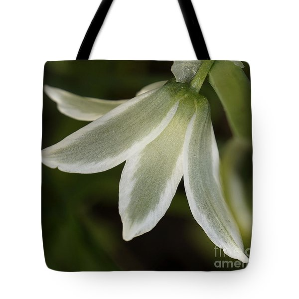 Tote Bag featuring the photograph Inner Glow by Inge Riis McDonald