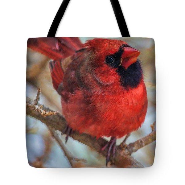 Inquisitive Cardinal Tote Bag