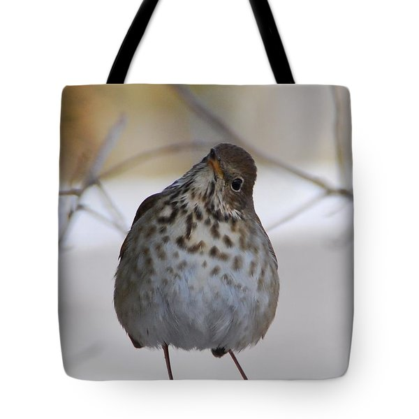 Inquisitive Hermit Thrush Tote Bag