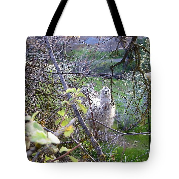 Inquisitive Tote Bag