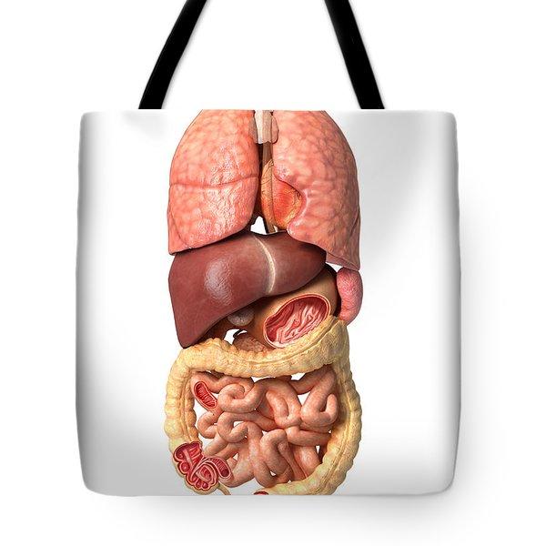 Internal Organs Of The Respiratory Tote Bag by Leonello Calvetti