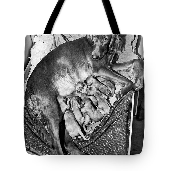Irish Setter With 12 Puppies Tote Bag by Underwood Archives