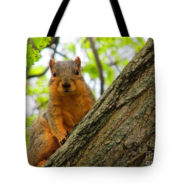 Is It Alright To Have Some Acorns ? Tote Bag by Tina M Wenger