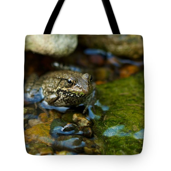 Tote Bag featuring the photograph Is There A Prince In There? - Frog On Rocks by Jane Eleanor Nicholas