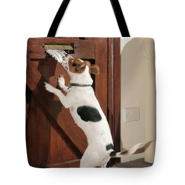Jack Russell Terrier Gets Paper Tote Bag