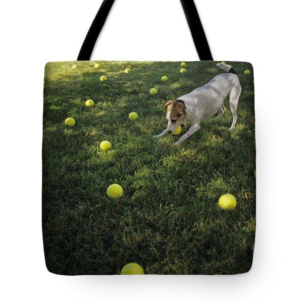 Jack Russell Terrier Tennis Balls Tote Bag