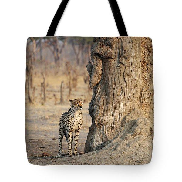 Jaguar In Hwange National Park Tote Bag by BC Imaging