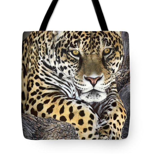 Tote Bag featuring the photograph Jaguar Portrait Wildlife Rescue by Dave Welling