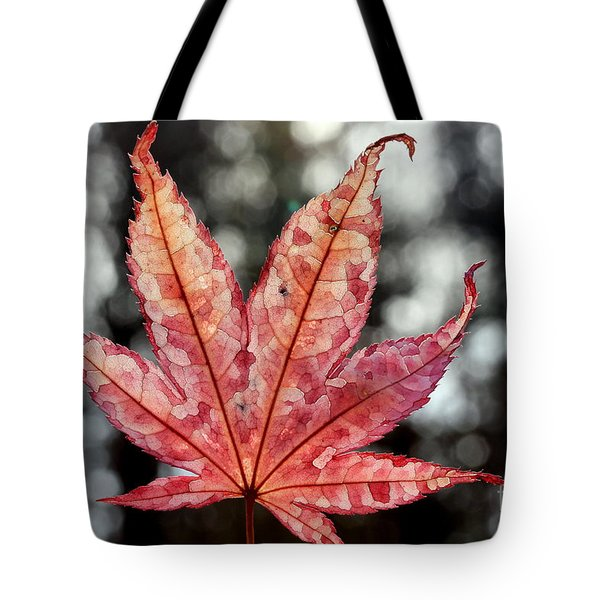 Japanese Maple Leaf - 2 Tote Bag by Kenny Glotfelty