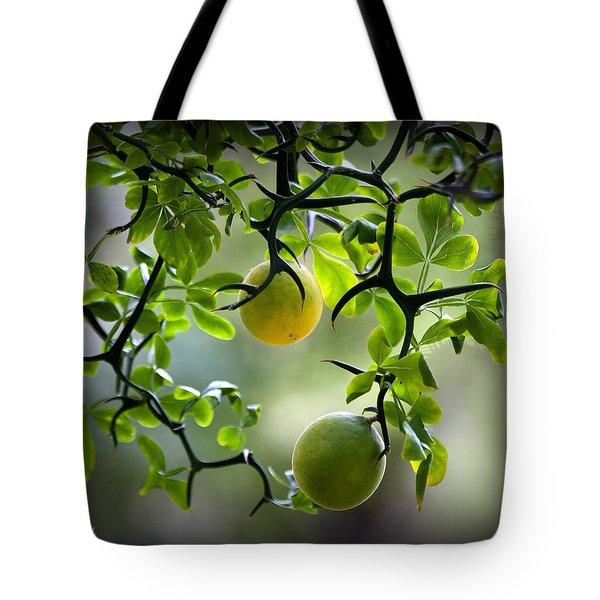 Japanese Orange Tree Tote Bag