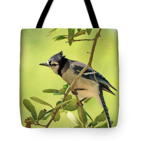 Jay In Nature Tote Bag by Deborah Benoit