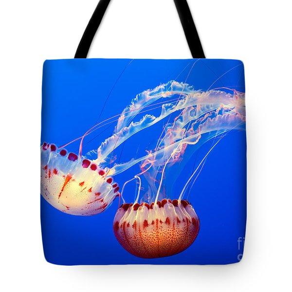 Jelly Dance - Large Jellyfish Atlantic Sea Nettle Chrysaora Quinquecirrha. Tote Bag by Jamie Pham