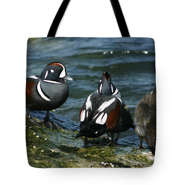 Jesters Of The Sea Tote Bag
