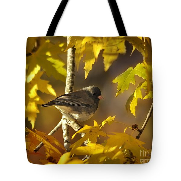 Junco In Morning Light Tote Bag by Nava Thompson