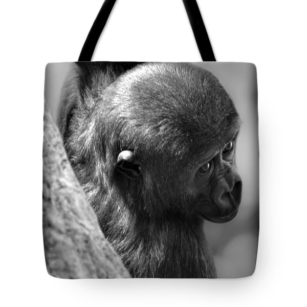 Tote Bag featuring the photograph Just Hang'in  by Adam Olsen