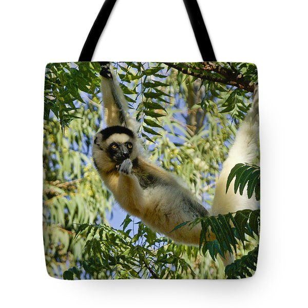Just Hanging Around Tote Bag by Michele Burgess