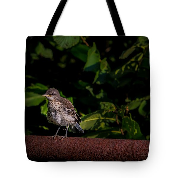 Just Out Of The Nest Tote Bag