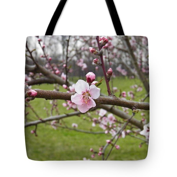 Just Peachy 3 Tote Bag by Nick Kirby