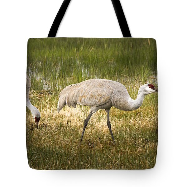 Just Poking Around Tote Bag by Jean Noren