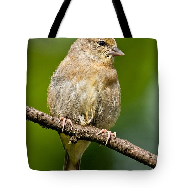 Juvenile American Goldfinch Tote Bag