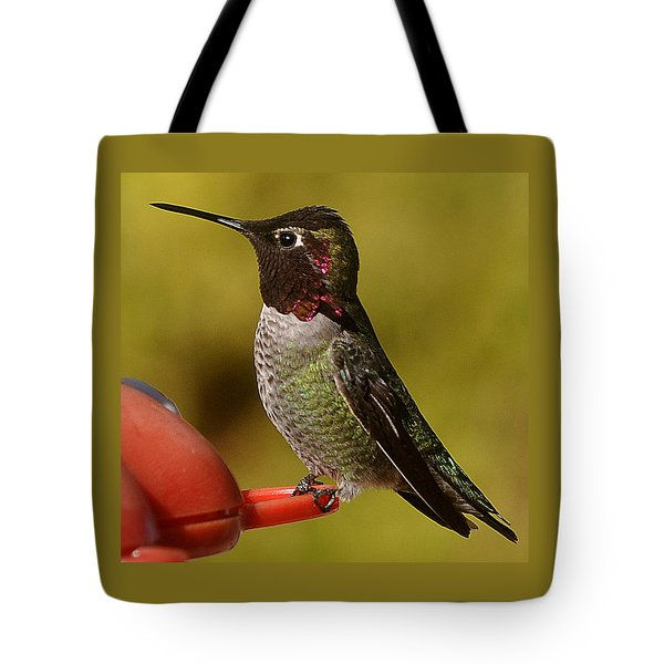 Tote Bag featuring the photograph Juvenile Male Anna by Jay Milo